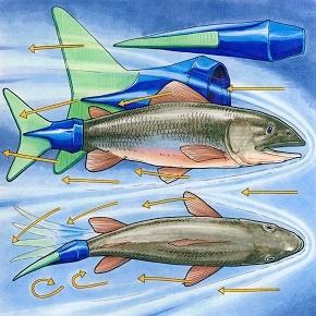 2015.11.05_Engineering_Everywhere_Fish.jpg
